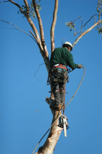 Hackettstown Dangerous Tree Removal