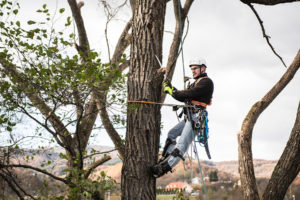 Tree Pruning Near Me