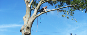 Tree pruning in New Jersey